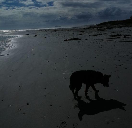 #walkingyourdog Low Tide Sea Sand Water Sky Landscape