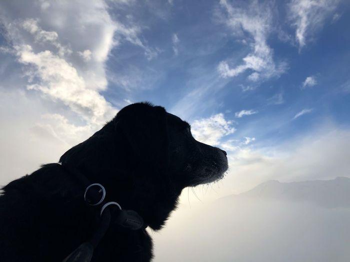 Dog looking away against sky