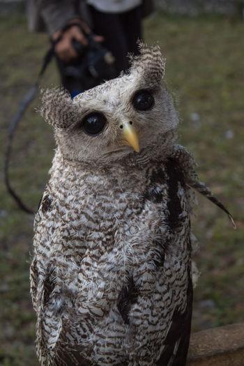 owl Bird Focus