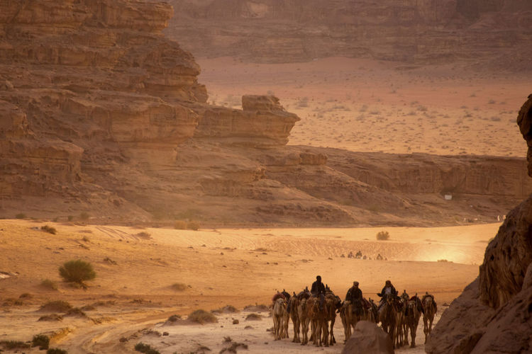 People riding camels at desert