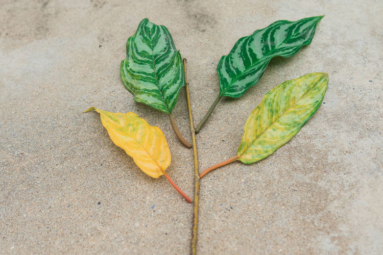 Close-up Creativity Day Directly Above Food Food And Drink Fragility Freshness Green Color High Angle View Leaf Leaves Nature No People Outdoors Plant Plant Part Small Group Of Objects Still Life Two Objects Yellow
