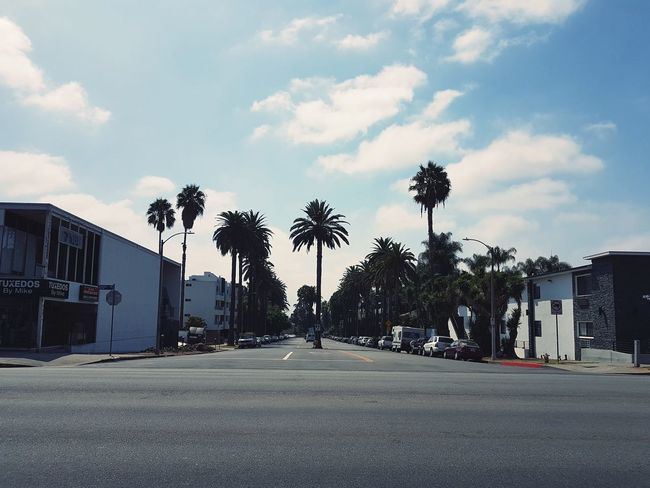 California Hollywood Street City Palm Tree Sky Architecture Building Exterior Built Structure Cloud - Sky
