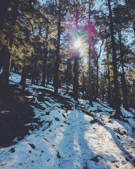 Walking amidst snow. Nature Naturephotography Mountain Trees Himalaya Kedarkantha Travel Snow White Trekking Instadailly Igers Instagood Travelblogger Lifeofadventure Thattravelblog Lonelyplanet Worldtravelbook Worlderlust BBCTravel Nikontop Snow ❄ Himalayas Mountain An Eye For Travel