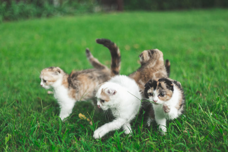 Cats on a field