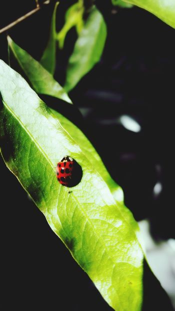 Ladybug Morning Light Leaves Striations In Living Color EyeEm Nature Lover EyeEm Colorful!