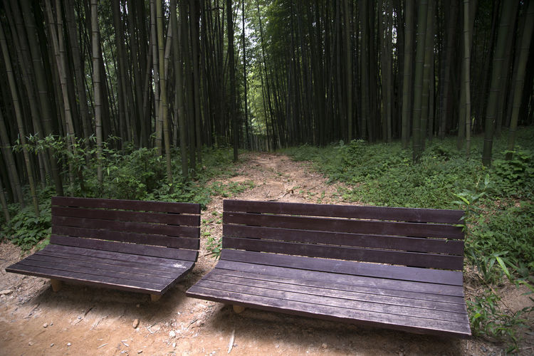 Juknokwon, the famous bamboo park in Damyang, Jeonnam, South Korea Bench Damyang Juknokwon Absence Bamboo Forest Bamboo Park Benches Day Forest In The Forest Nature No People Outdoors Scenics Tree Tree Trunk Wood - Material WoodLand