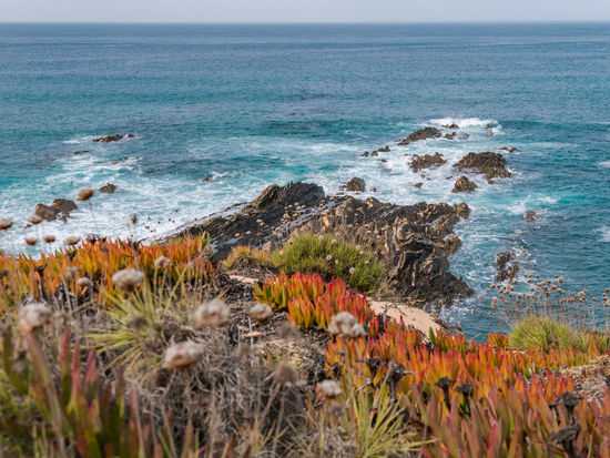 Growth Nature Plant Portugal Rock Tranquility Travel Travel Photography Traveling Wave Beauty In Nature Cavaleiro Flower Horizon Over Water Ocean Outdoors Photography Scenics Scenics - Nature Sea Seascape Sky Tranquil Scene Travel Destinations Water