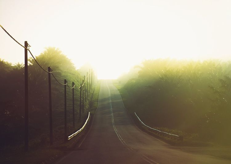 Lens Flare Sunlight Road Transportation The Way Forward Outdoors No People Nature Day Fog Beauty In Nature Tree Sky Sommergefühle