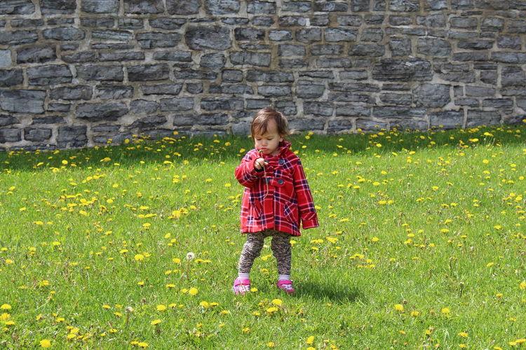 Full length of girl holding flower while standing on grass
