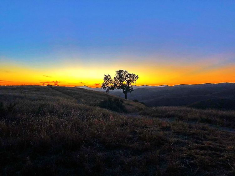 Hillside Sky Sunset Scenics - Nature Tranquility Beauty In Nature Tranquil Scene Nature Tree Orange Color Land Outdoors