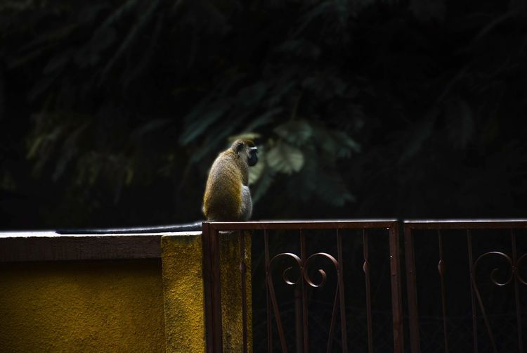 🐒 View Summer ☀ EyeEm Monkey Animal Wildlife Animal Animal Themes Animals In The Wild Vertebrate One Animal No People Bird Fence Focus On Foreground Wood - Material Boundary Nature Barrier Outdoors Day Close-up
