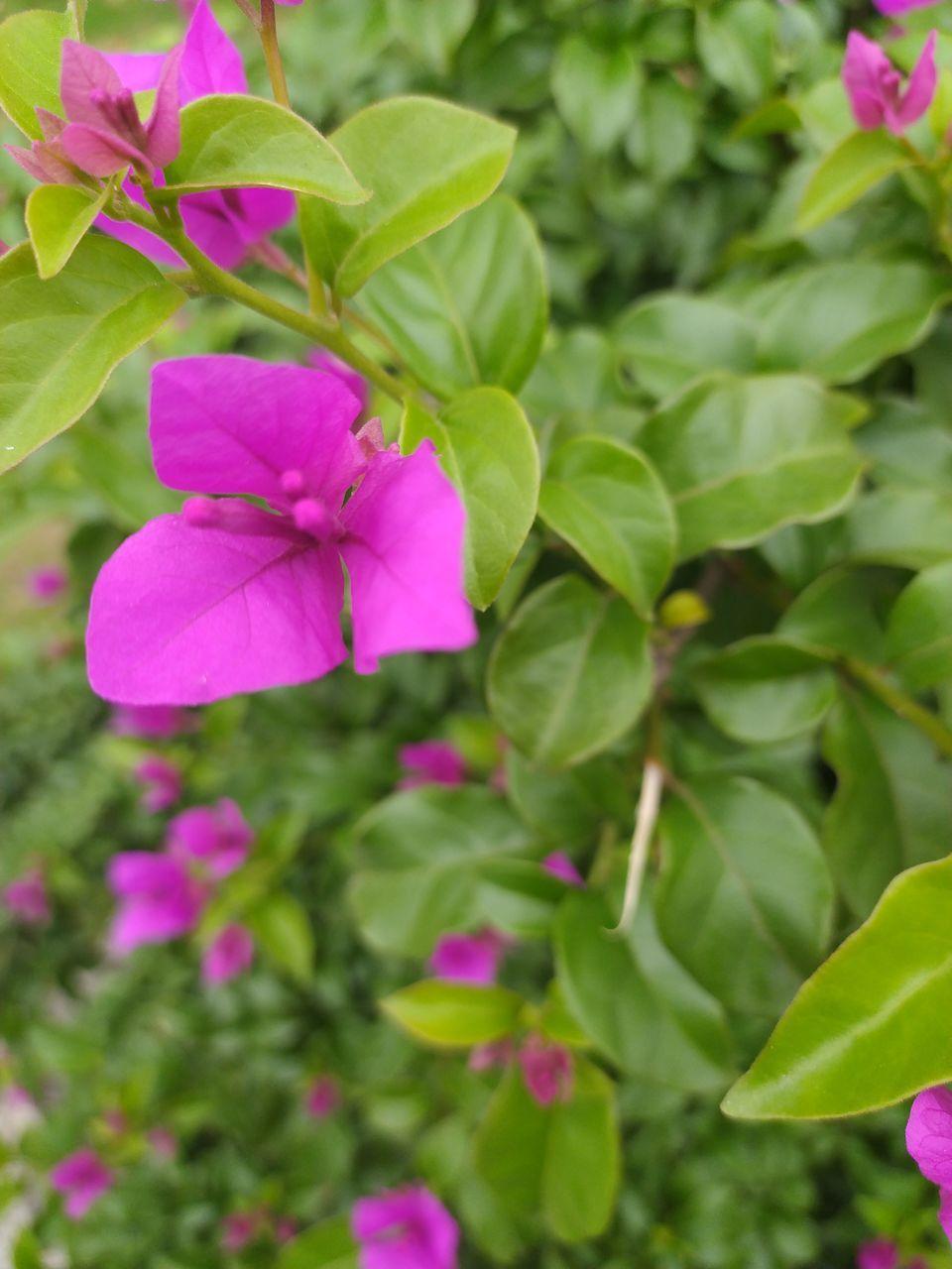 CLOSE-UP OF PURPLE FLOWERING PLANT