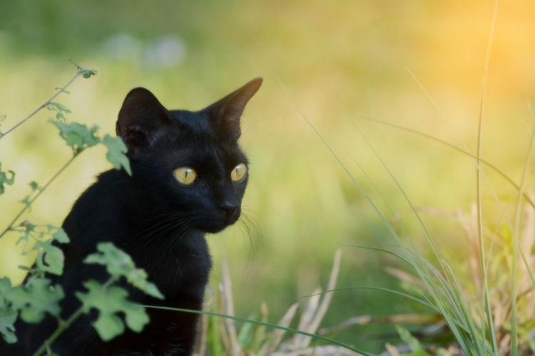 Close-up of black cat on field