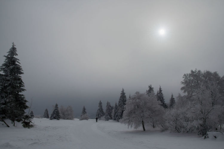 Cold and slightly foggy winter landscape Shades Of Winter Beauty In Nature Cold Temperature Day Fog Forest Landscape Landscape_Collection Landscape_photography Moon Nature Outdoors Scenics Sky Snow Snowing Spooky Sun Sunlight Tree Winter Winter Landscape Winter Wonderland Winter_collection Winterwonderland