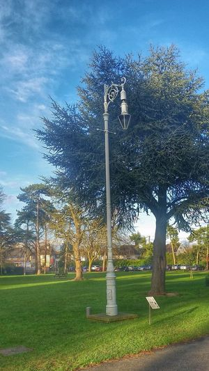Street Furniture Lamp Lamp Post Oaklands Tree Trees At The Park Blue Sky TreePorn Chelmsford