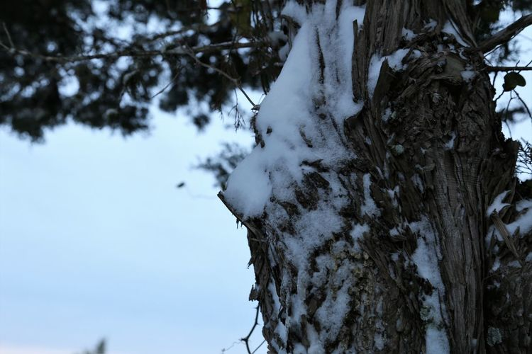 Close-up of snow covered tree in forest