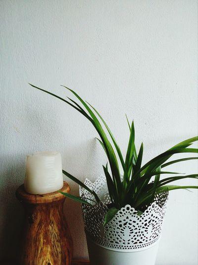 Vase Close-up Plant