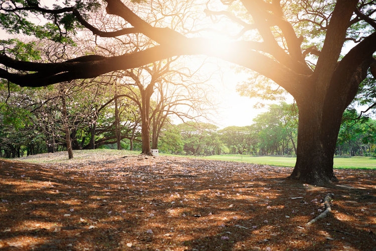 Beautiful nature with sunset in public park. Tree Plant Trunk Tree Trunk Nature Sunlight Tranquility Growth No People Day Beauty In Nature Land Branch Tranquil Scene Outdoors Sky Field Environment Scenics - Nature Landscape Public Park Sunset