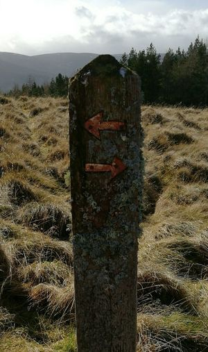 Which Way To Go? No People Close-up Rural Scene Lichen Signpost