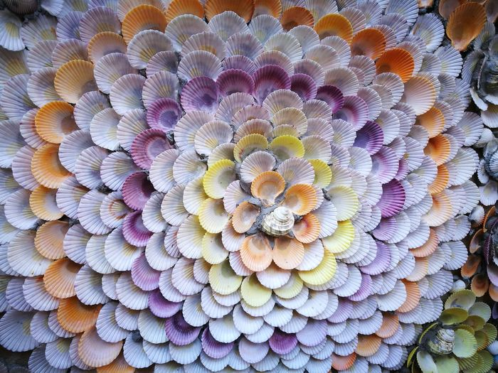 Shell Full Frame Pattern Multi Colored No People Backgrounds Concentric Close-up