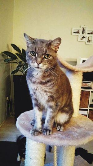 Love his dumb face? Cat Grey