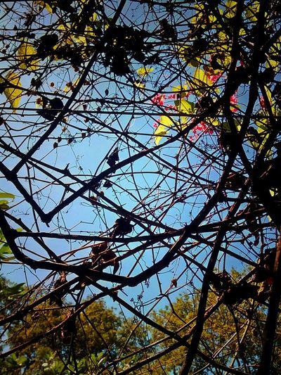 Ivy Creeper Creeper Plant Ivy Plant Ivy Photography Creeper Photography Colorful Nature Color Of Nature Nature Color Nature Nature Photography Nature Collection Beauty Of Nature Nature Art Nature Art Photography Ivy Collection Creeper Collection