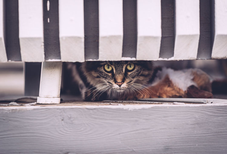 Alertness Animal Themes Cat Deck Domestic Animals Domestic Cat Focus On Foreground Looking At Camera One Animal Pets Portrait
