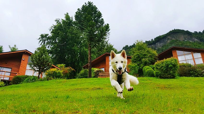 Dog Grass Pets One Animal Outdoors Animal Domestic Animals Animal Themes First Eyeem Photo