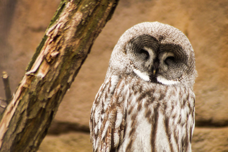 Portrait of a bird Animals In The Wild Animal Themes Animal One Animal Animal Wildlife Focus On Foreground Tree Vertebrate Close-up Bird No People Day Trunk Tree Trunk Owl Nature Bird Of Prey Outdoors Plant Portrait Animal Head  Animal Eye