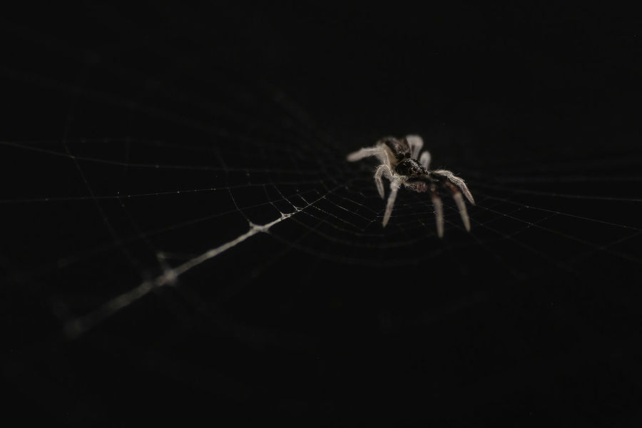 Black Background Macro Insects Macro Photography Minimalist Spider Animal Themes Animals In The Wild Black Background Close-up Macro Macro Nature Macro_collection Macrophotography Minimalism Minimalist Photography  Minimalistic Minimalistic Photography Nature No People One Animal One Insect Outdoors Spider Web Spiders Spiderworld