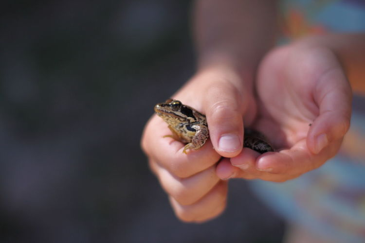Close-up of human hand holding small