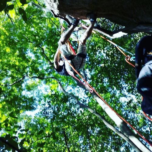 Rappel radical. Rapel Rappel Tree Low Angle View Day Two People Adults Only Outdoors Adult Full Length Adventure RISK Hanging Real People People Young Adult Climbing Nature Only Men