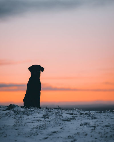 Silhouette dog on rock during sunset