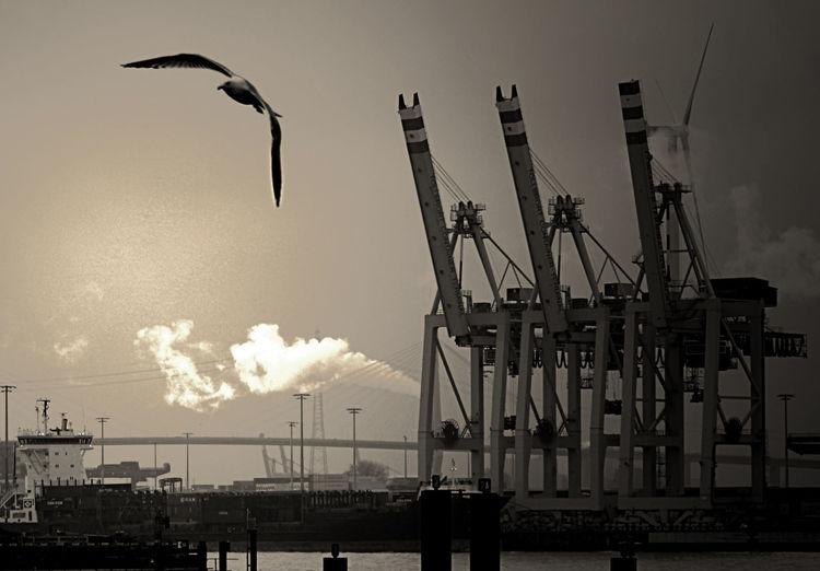 Bird flying above elbe river at port of hamburg