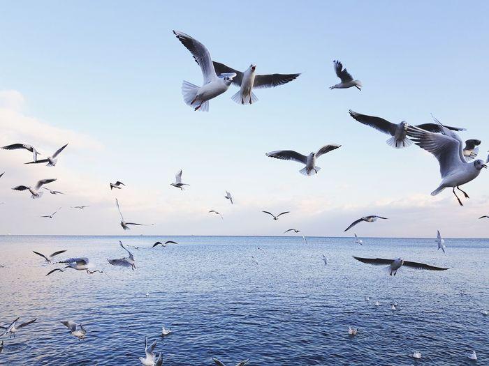 Flying Bird Animals In The Wild Animal Wildlife Flock Of Birds Spread Wings Mid-air