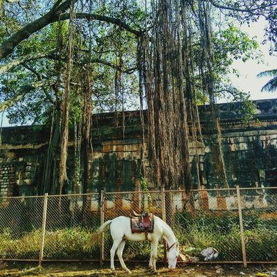 Horse Ponytail First Eyeem Photo