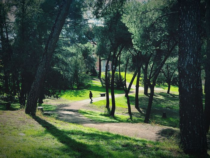 Walking in the park Still Life Tree Plant Growth Shadow Green Color Sunlight Nature Beauty In Nature Park Day Tranquility Park - Man Made Space Scenics - Nature Outdoors Tranquil Scene Grass Land EyeEmNewHere
