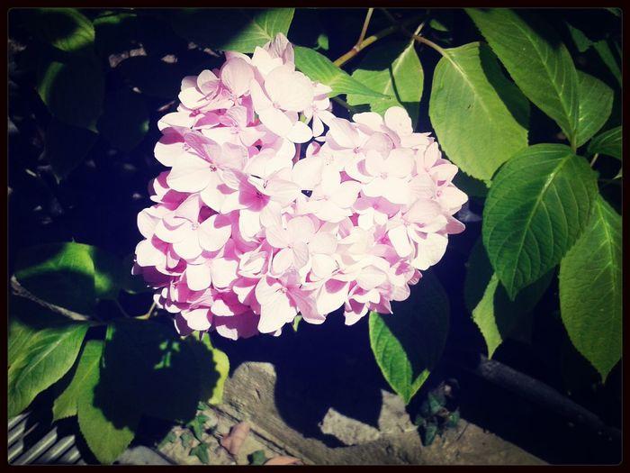 Nature 🌷 Flowers 🌹 Sunny Days . ☀ First Eyeem Photo