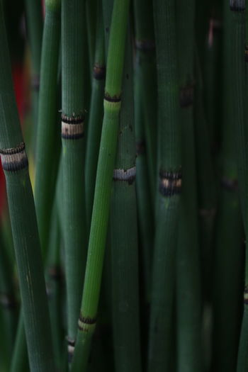 Bamboo groves in forest