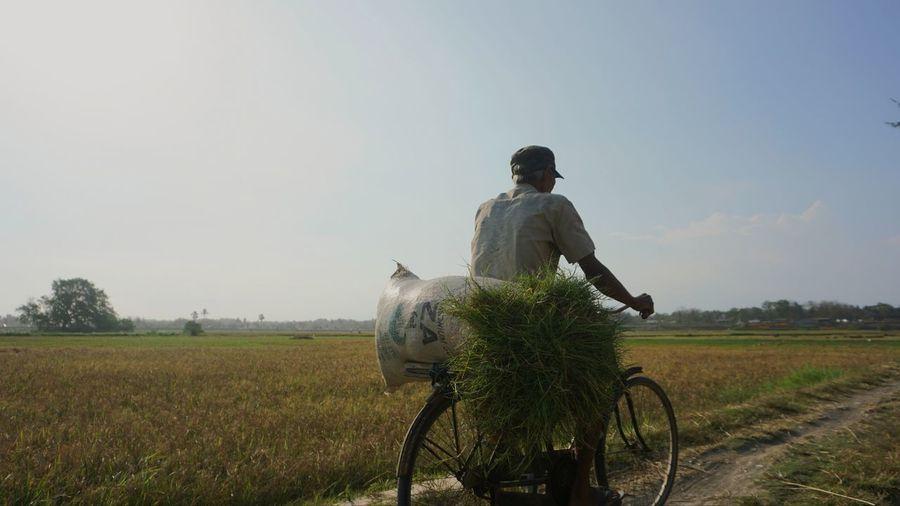 A farmer brings