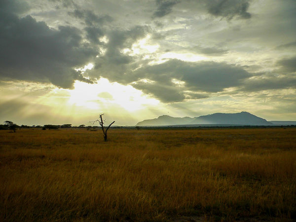 Shaba National Reserve in Northern Kenya Kenya The Week On EyeEm Africa Beauty In Nature Cloud - Sky Day Field Grass Landscape Nature No People Outdoors Safari Scenics Sky Sunset Tourism Travel Destinations Perspectives On Nature