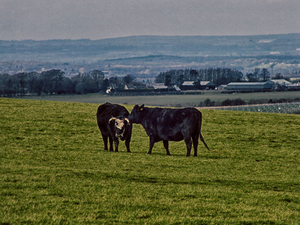 Beauty In Nature Countryside Field HDR Landscape Nik Collection Tranquility Wiltshire UK Wroughton