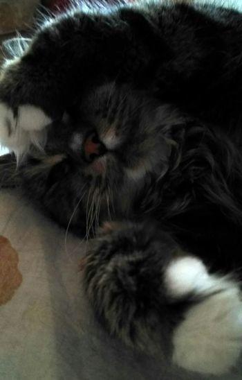 my cat Bison