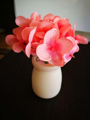 ดอกไม้พลาสติกFlower Close-up Pink Color Beauty Fragility Orchid Flower Head Black Background Celebration Gift No People Nature Indoors  Beauty In Nature Day
