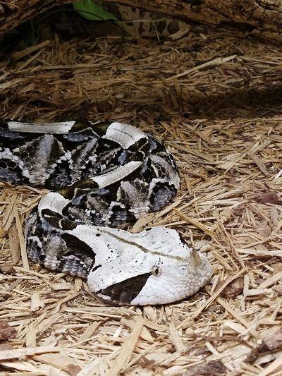 Snake Snakes Snake ♥ Snakes Are Beautiful Snakesofinstagram Snake Photography