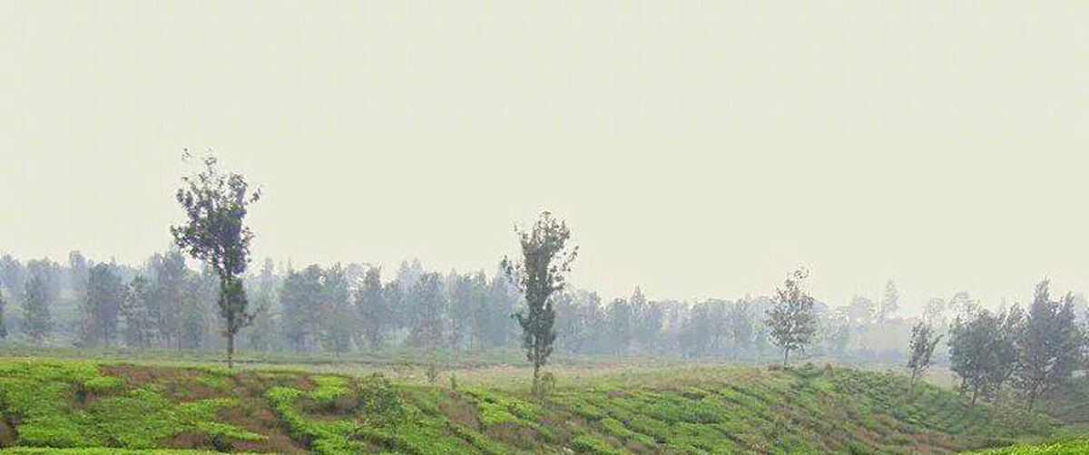 Melancholic Landscapes The EyeEm Facebook Cover Challenge Tea Garden Green Garden