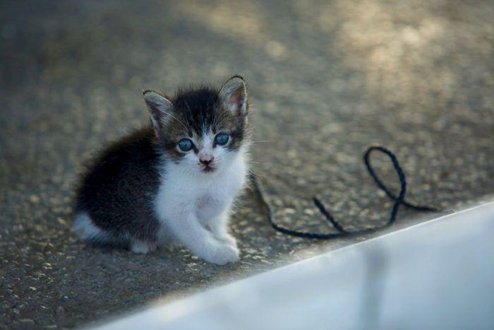 Tadaa Community My Photographic World Eyeem Best Shots - Animals Cats Kitty Cat Lovers EyeEm Best Shots Cats Cute Cats Kittens Cat♡