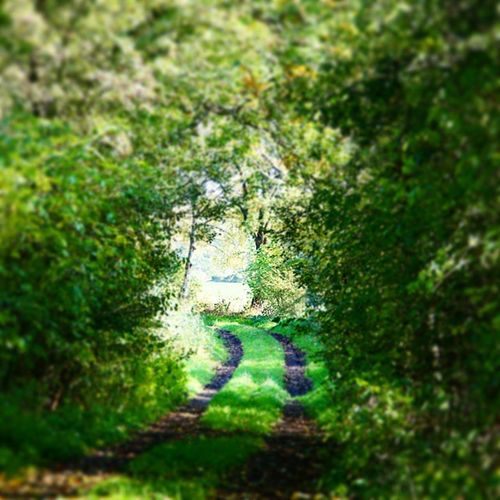 Übers Land auf alten Wegen Landgram Natur Roadtrip Schleswig -holstein Landpartie