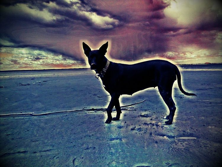 My dog is Magic! Animal Animal Head  Animal Themes Curiosity Dog Domestic Animals Mammal One Animal Pets Side View Sitting Standing Zoology Pastel Power Clouds And Sky Posttraumatic Pictures Freshness Hippykid Kreatives Sky_collection Charlotte PullingDog Love Dogs My Dog Digital Art