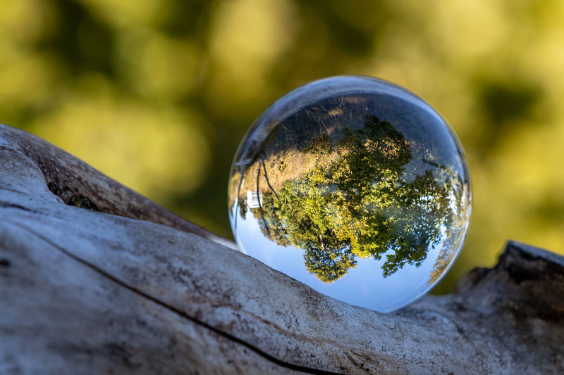 Close-up of crystal ball with reflection of trees